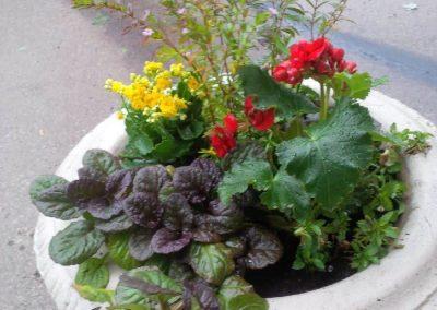Squat decorative planter